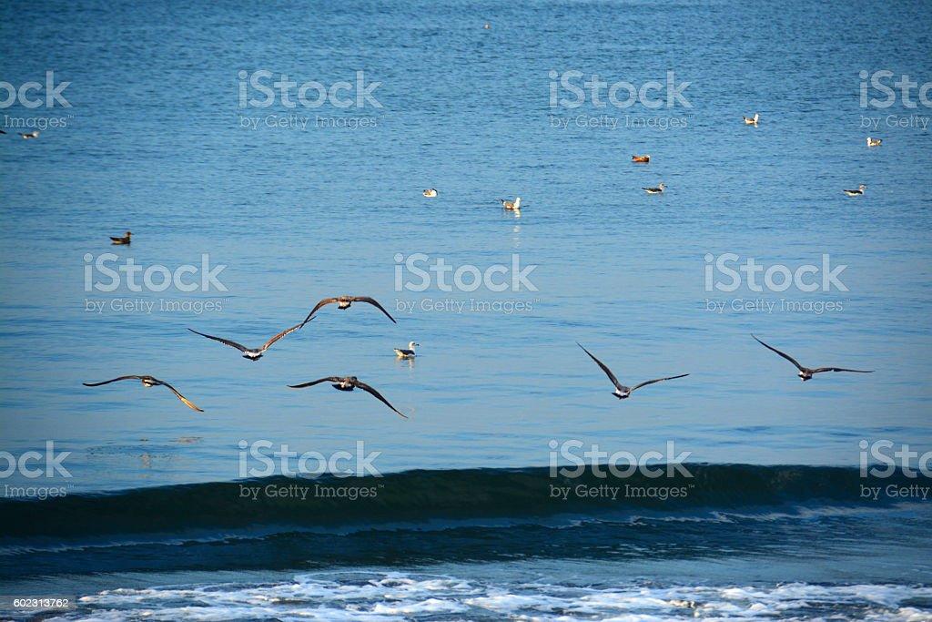 Sea bird,Shonan stock photo