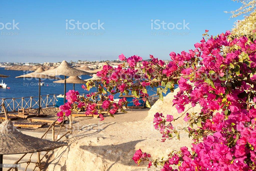 Море, бугенвилиями и Пляжный зонт Стоковые фото Стоковая фотография
