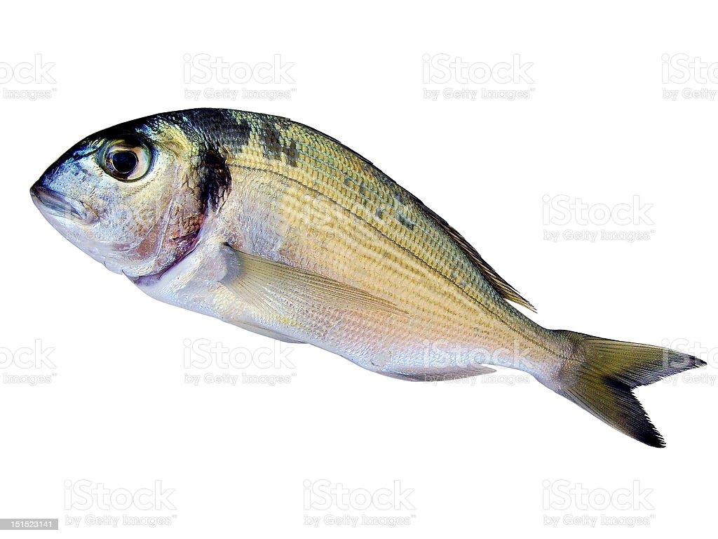 Sea bream fish royalty-free stock photo