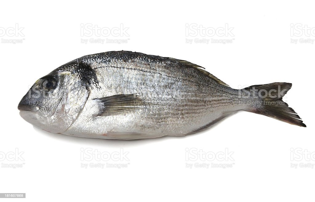 sea bream isolated royalty-free stock photo