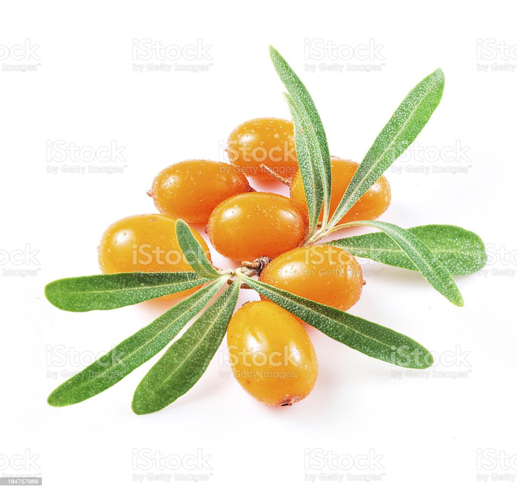 sea buckthorn berries isolated on the white stock photo