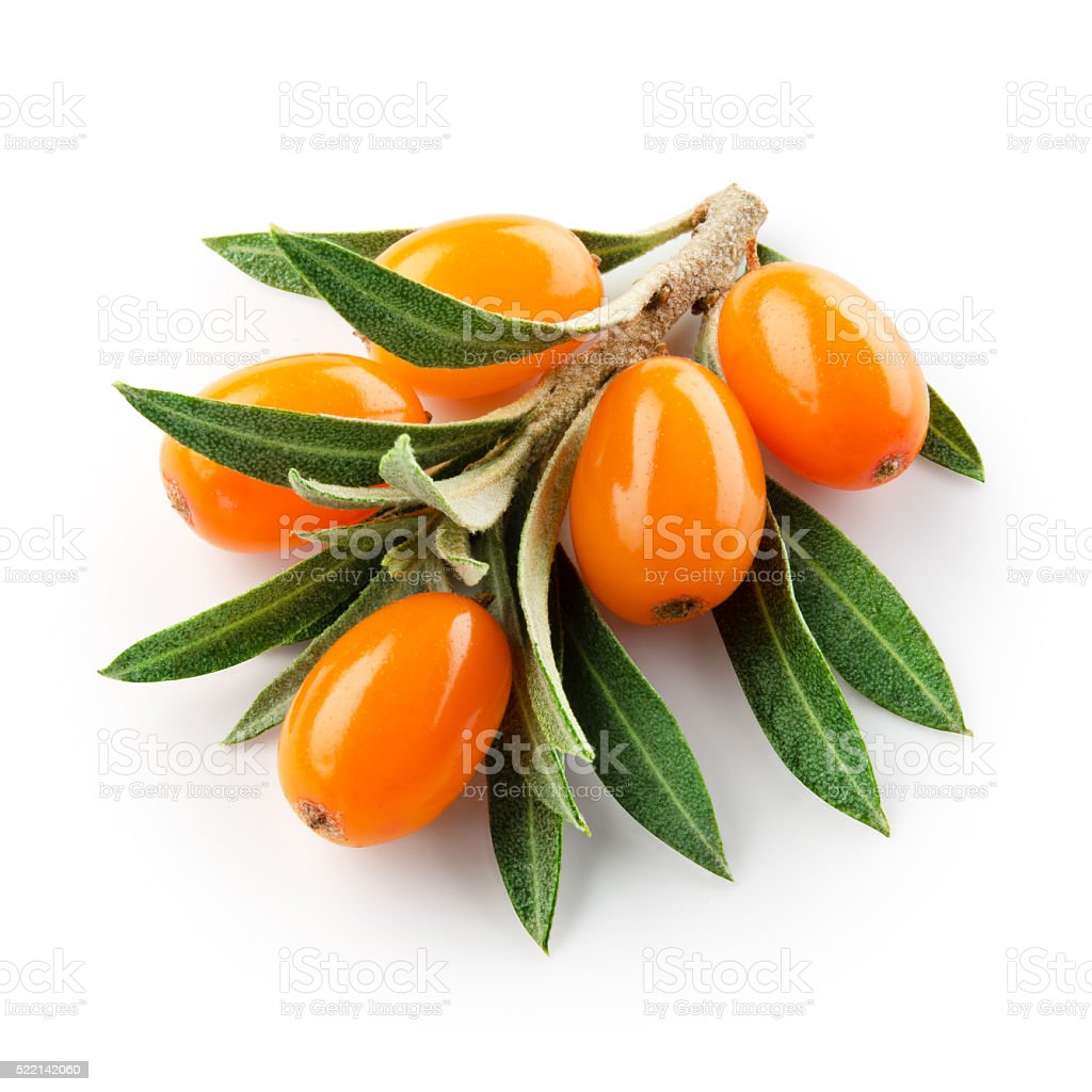 sea buckthorn branch isolated on the white. With clipping path. stock photo