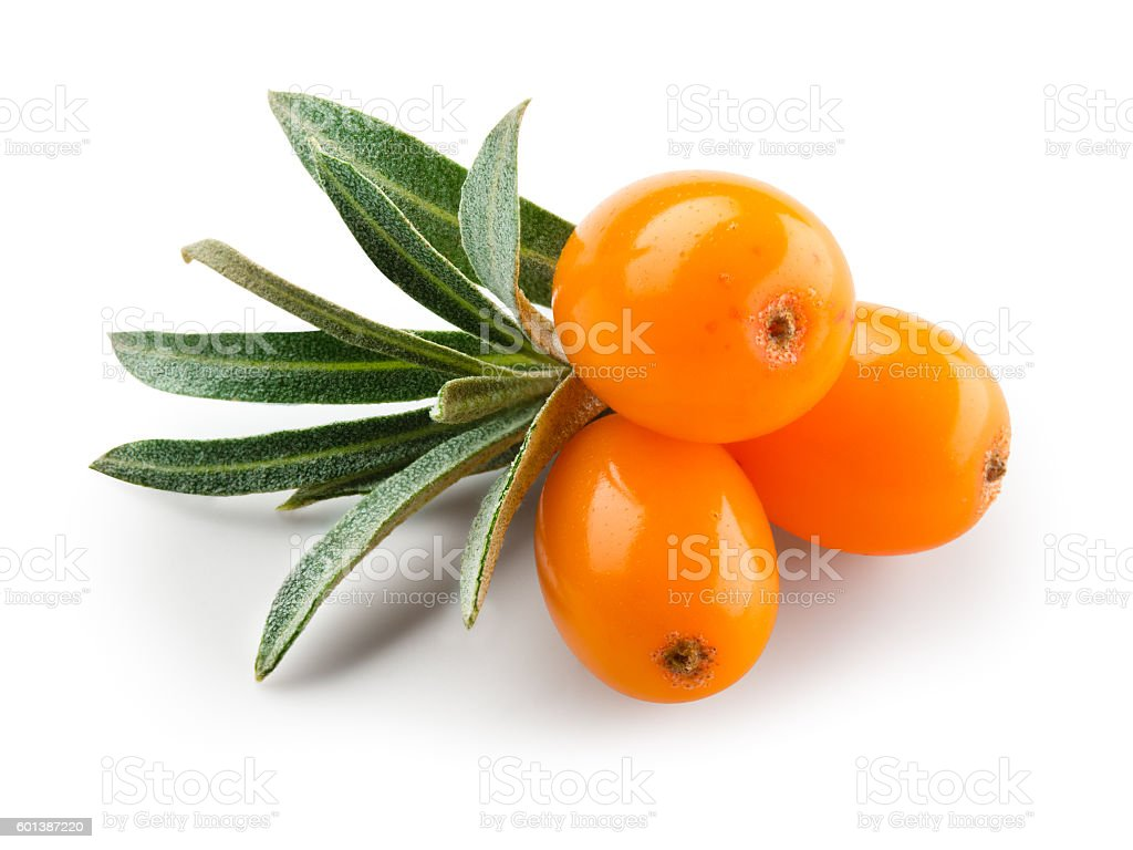 Sea buckthorn isolated on the white. With clipping path. stock photo