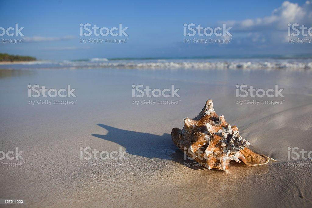 Sea cockleshell stock photo