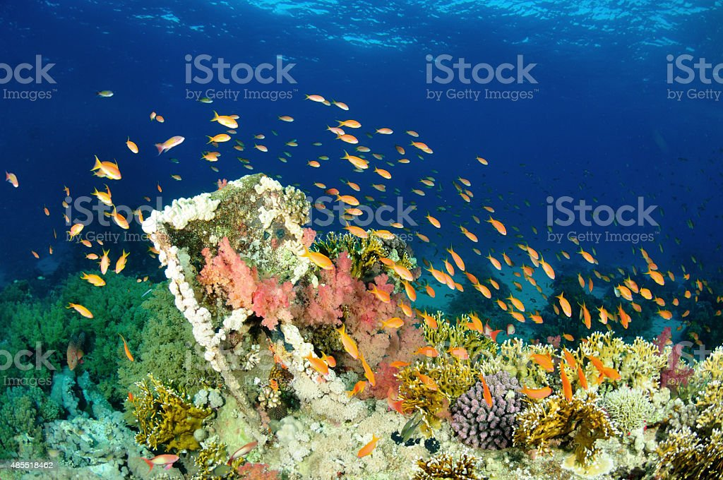 Sea Coral reef Scalefin fish Scuba Diver Point of View stock photo