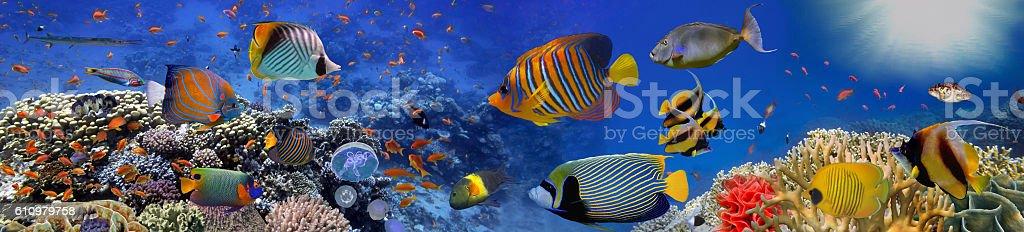 Sea corals. Panorama stock photo