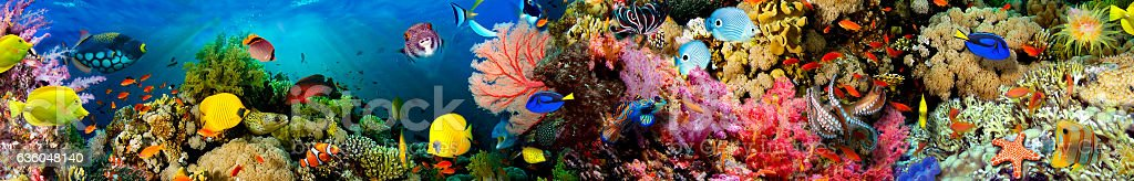 Sea corals. Panorama. stock photo