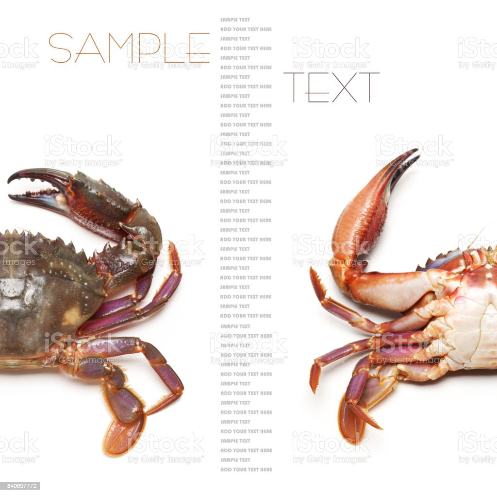 Sea Crab isolated on the white background stock photo
