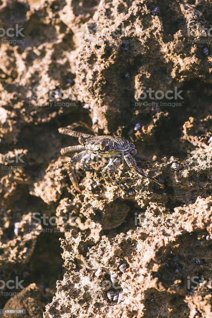 Sea crab stock photo