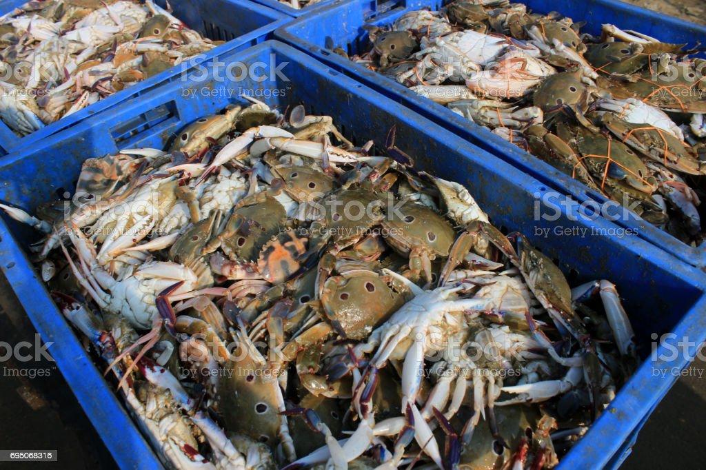 Sea crab. stock photo