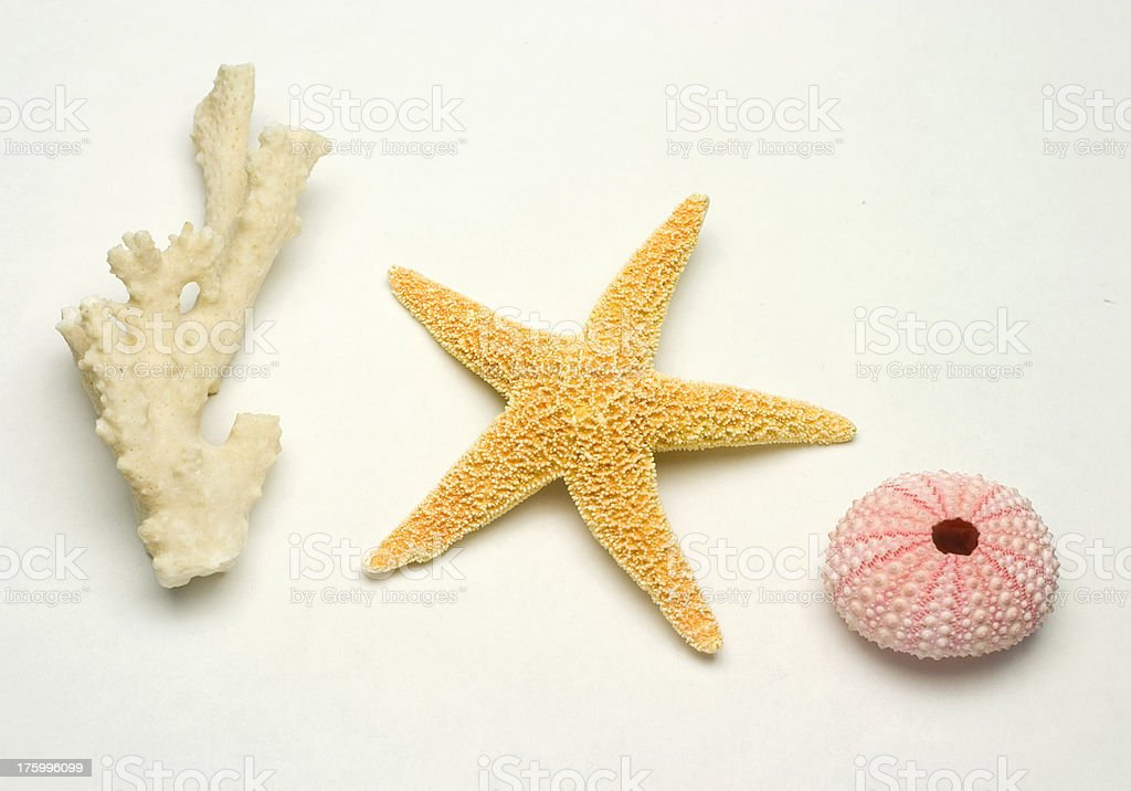 Sea critters royalty-free stock photo