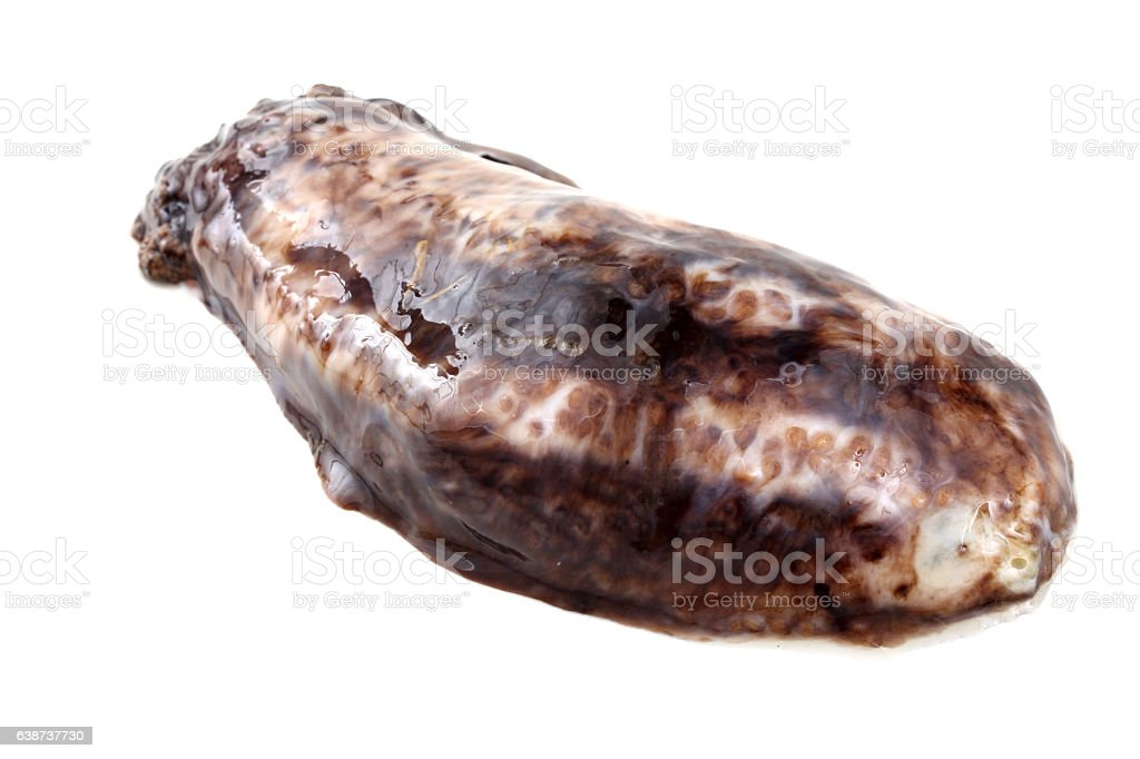 Sea cucumber (cucumaria) stock photo