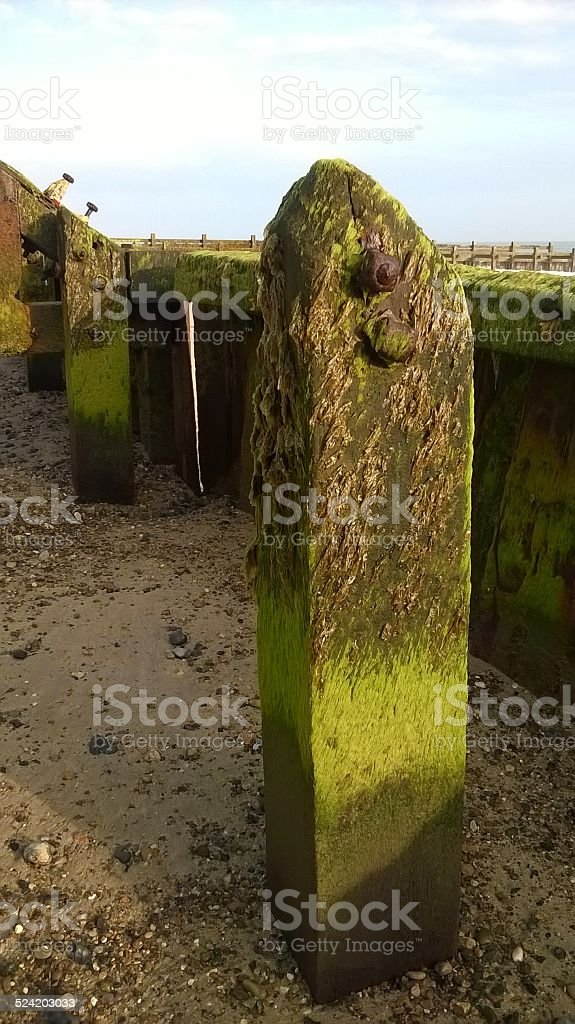 Sea defence post in green stock photo