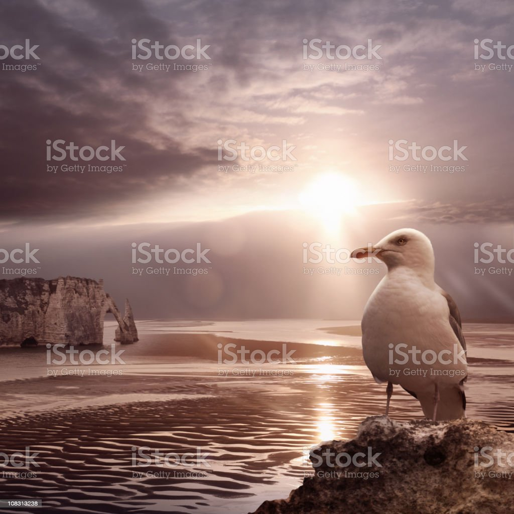 Sea ebb sunset with stone bridge and seagull stock photo