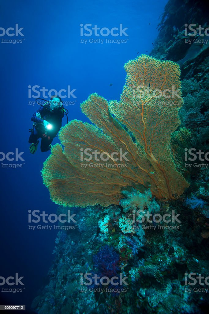 Sea fan and diver - Palau, Micronesia stock photo
