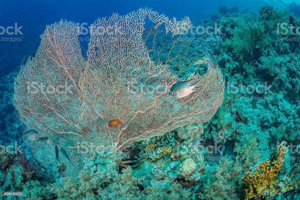 Sea fan habitat stock photo