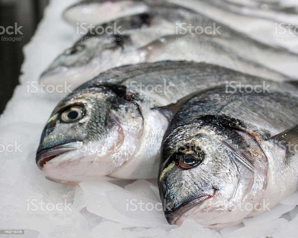 Sea fish on ice stock photo
