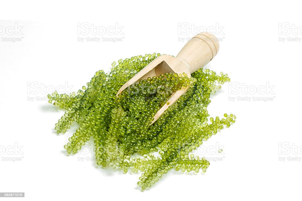Sea grapes ( green caviar ) seaweed, Healthy food. stock photo