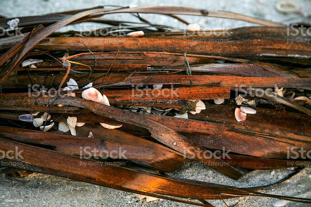 sea grass and shells stock photo