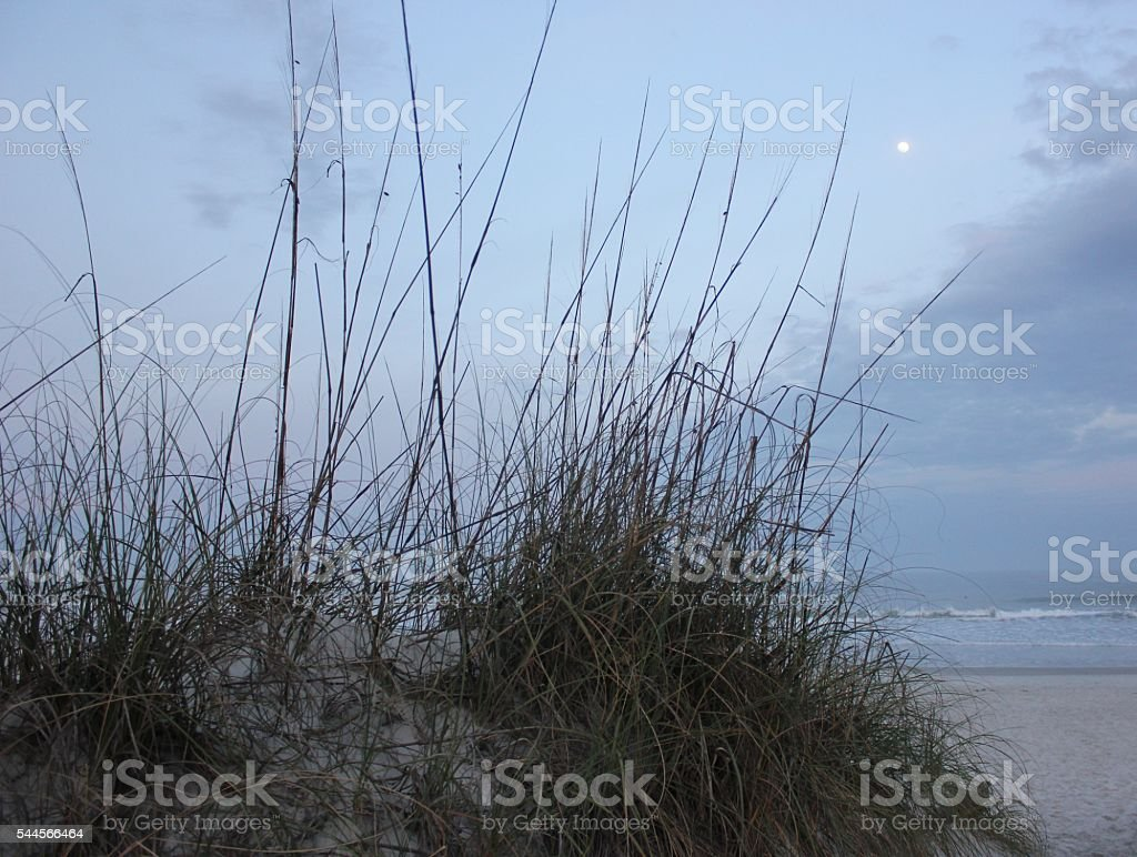 Sea Grass and the Moon stock photo