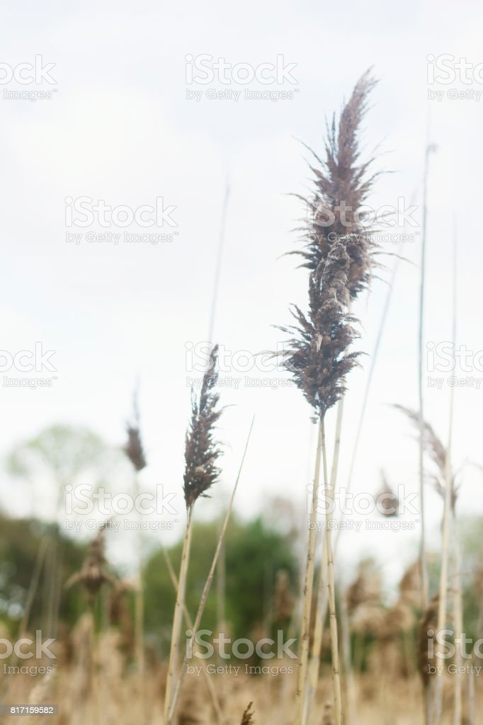 Sea grass growing on a path stock photo