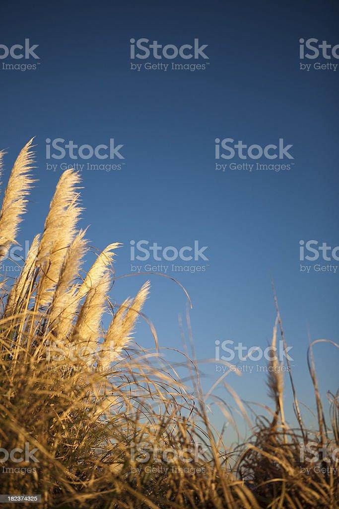 Sea Grass royalty-free stock photo