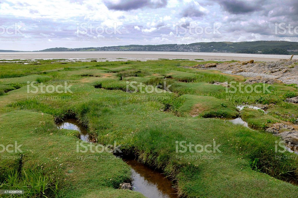 Sea Grass stock photo
