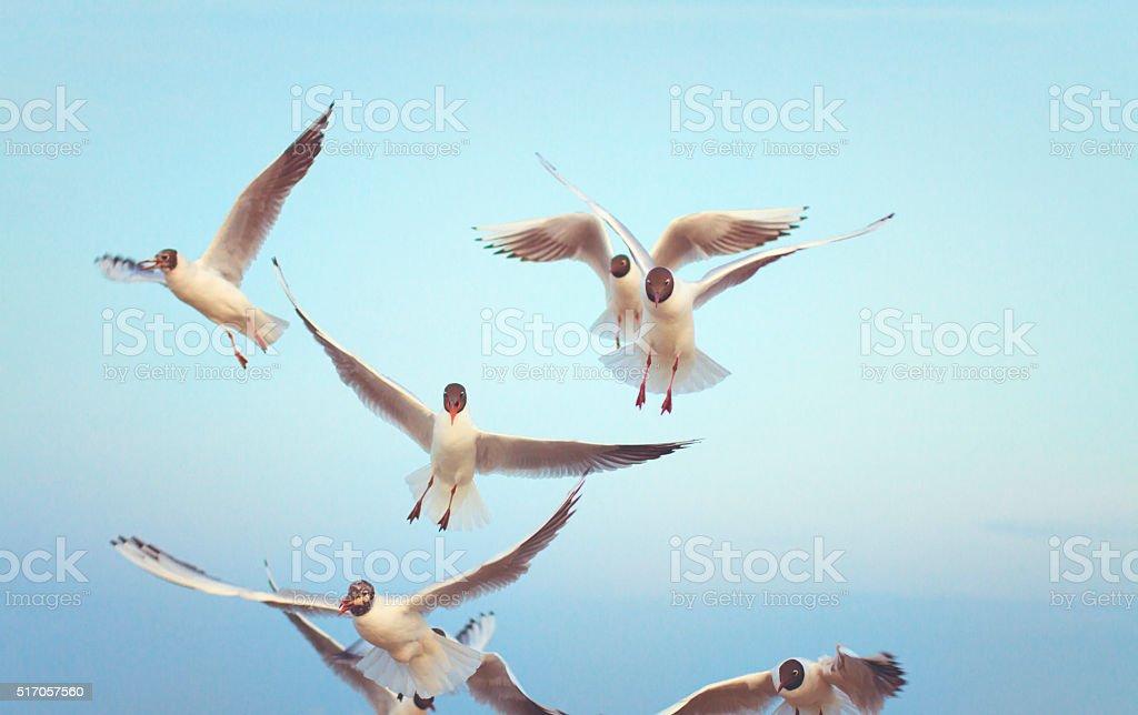 Sea gull at the Ocean stock photo