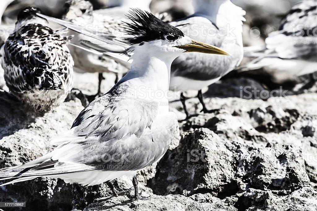 Sea Gull in Australia stock photo