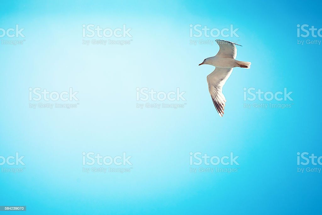 sea gull over the sky stock photo