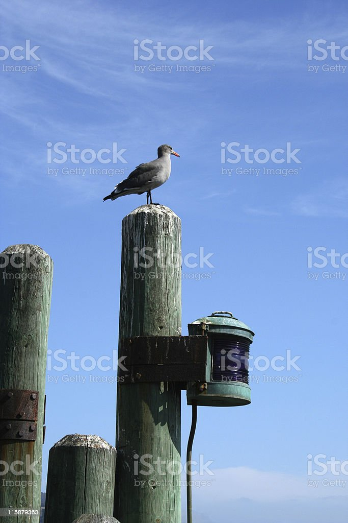 Sea Gull Standing garde de Sausalito photo libre de droits