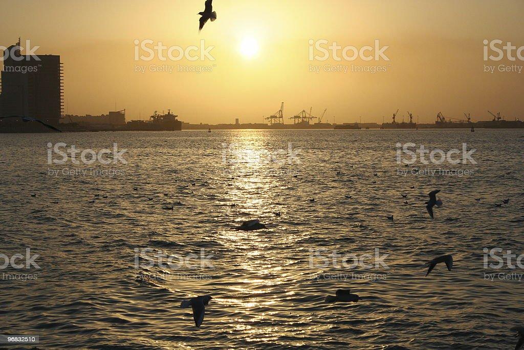 sea gull & sunset royalty-free stock photo
