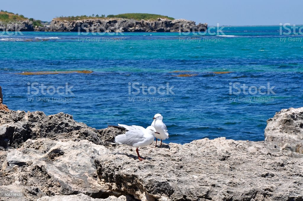 Sea Gulls at Cape Peron stock photo