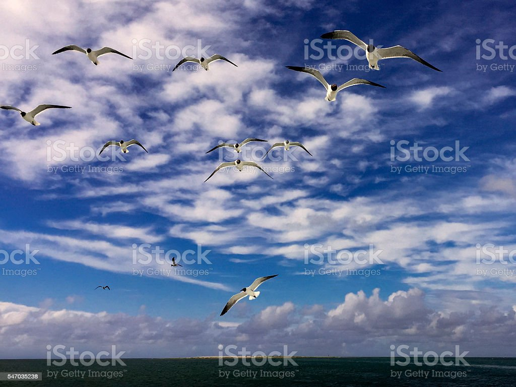 Sea Gulls over the Water stock photo