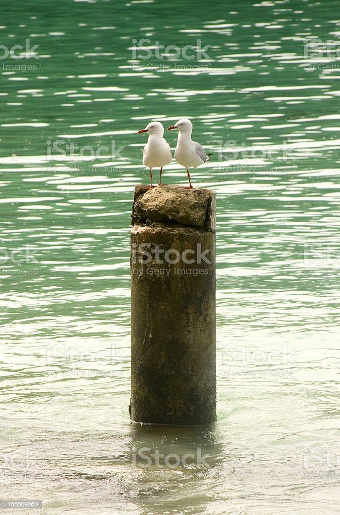Sea Guls resting on a tree stump, New Caledonia royalty-free stock photo