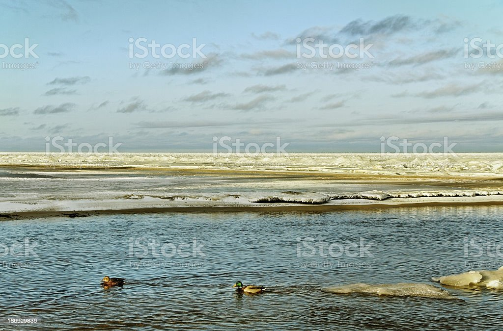 Sea in winter. royalty-free stock photo