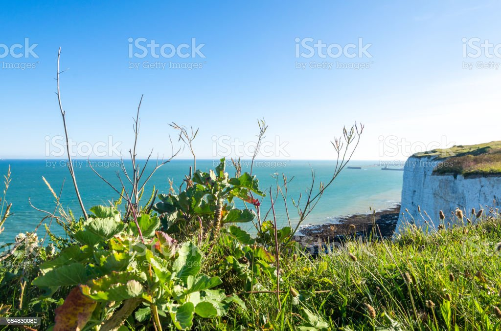 Sea kale above the White Cliffs of Dover in summer stock photo