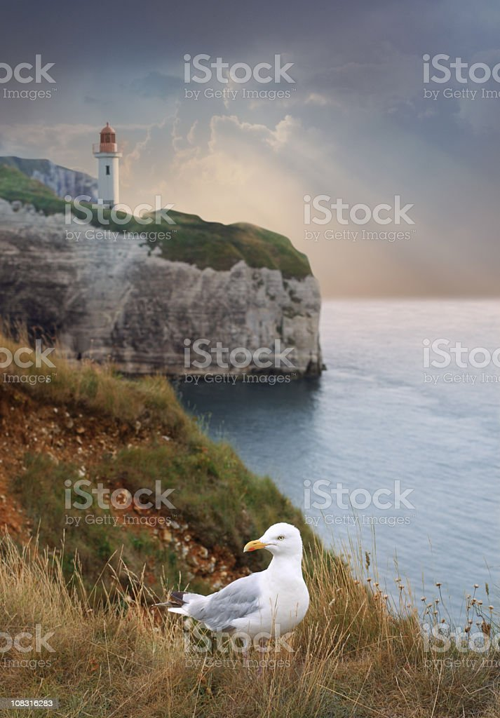 Sea landscape with rock, lighthouse and seagull stock photo