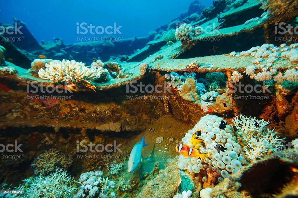 Sea life  anemone clownfish and coral  Shipwreck Diving stock photo