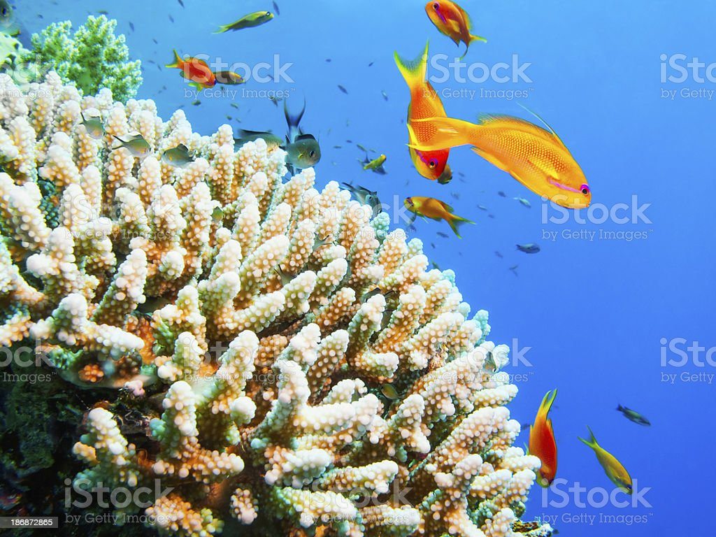 Sea life - coral reef stock photo