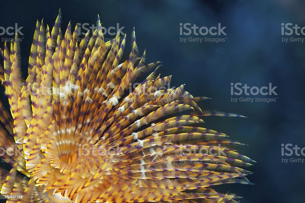 Sea life royalty-free stock photo