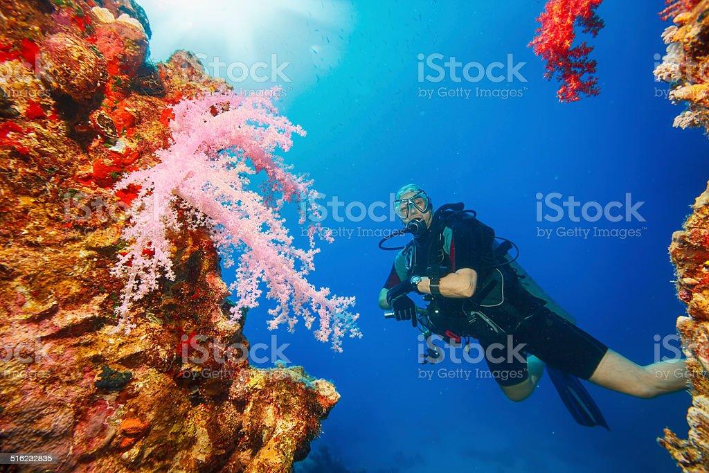 Sea life - Prickly alcyonarian stock photo