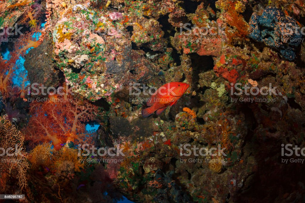 Sea life   Scuba diver is exploring and enjoying Coral reef   Underwater photo stock photo