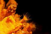 Sea Life   Underwater beauty   Yellow coral Mediterranean Sea