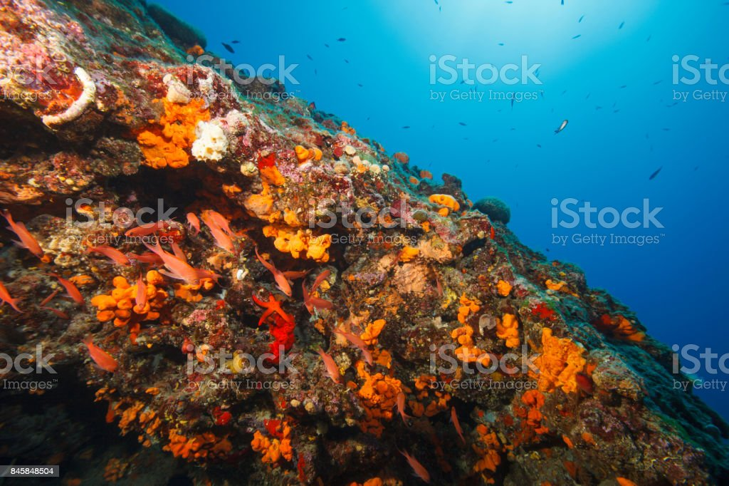 Sea life Underwater  Scuba diver point of view Mediterranean sea stock photo
