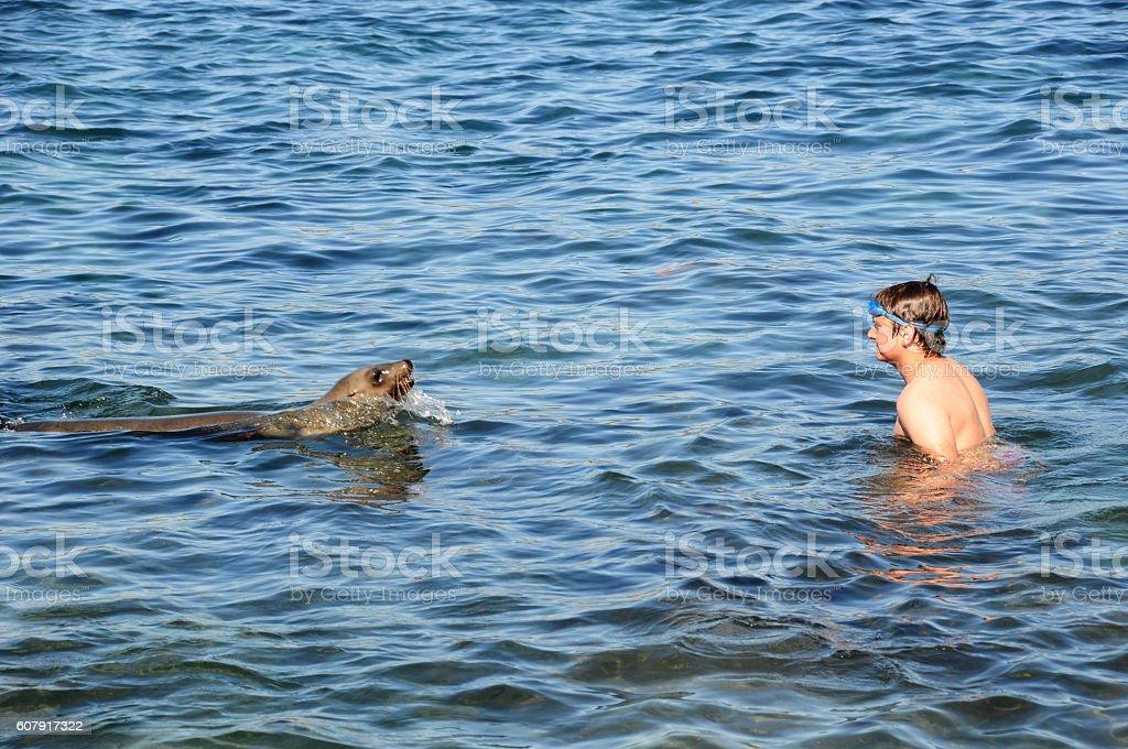 Sea Lion and boy encounter at La Jolla Cove, California stock photo