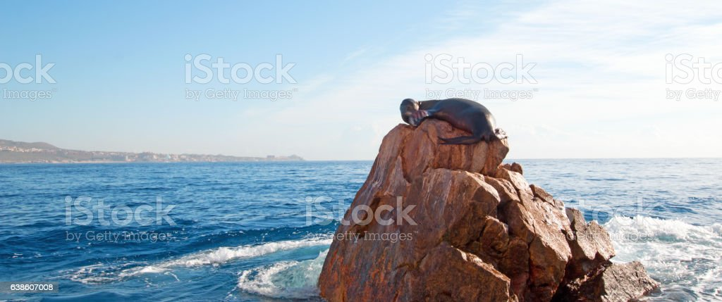 Sea Lion laying on the Pinnacle of Lands End stock photo