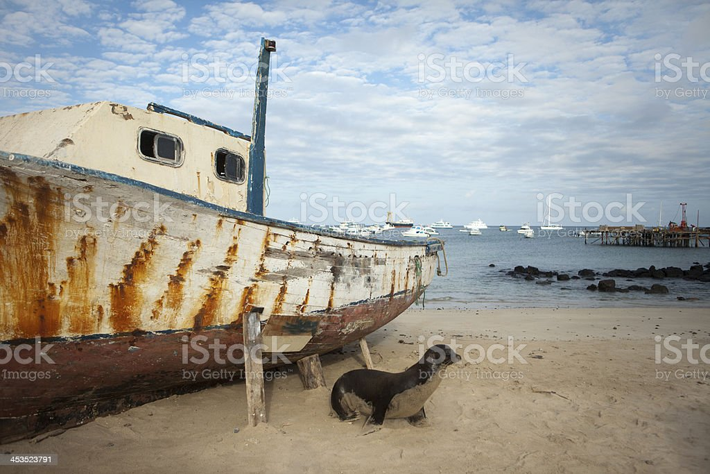 Sea Lion On Beach With Boat royalty-free stock photo