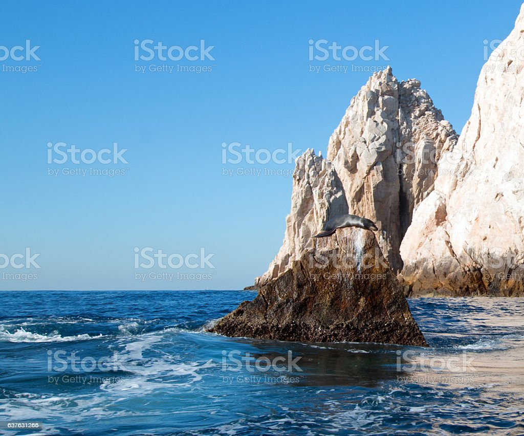 """Sea Lion on 'Lands End"""" of Los Arcos in Cabo stock photo"""