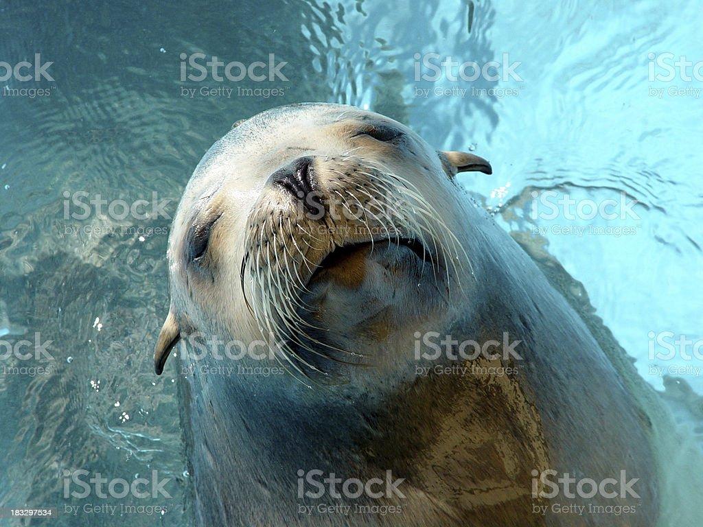 Sea lion! stock photo